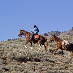 Ranch-Horses-idaho.jpg